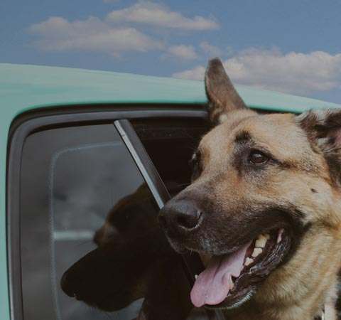 Travel With Pets Bc Ferries